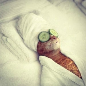 Source: http://www.unikz.com/russian-spa-for-cats.html/cat-spa-2
